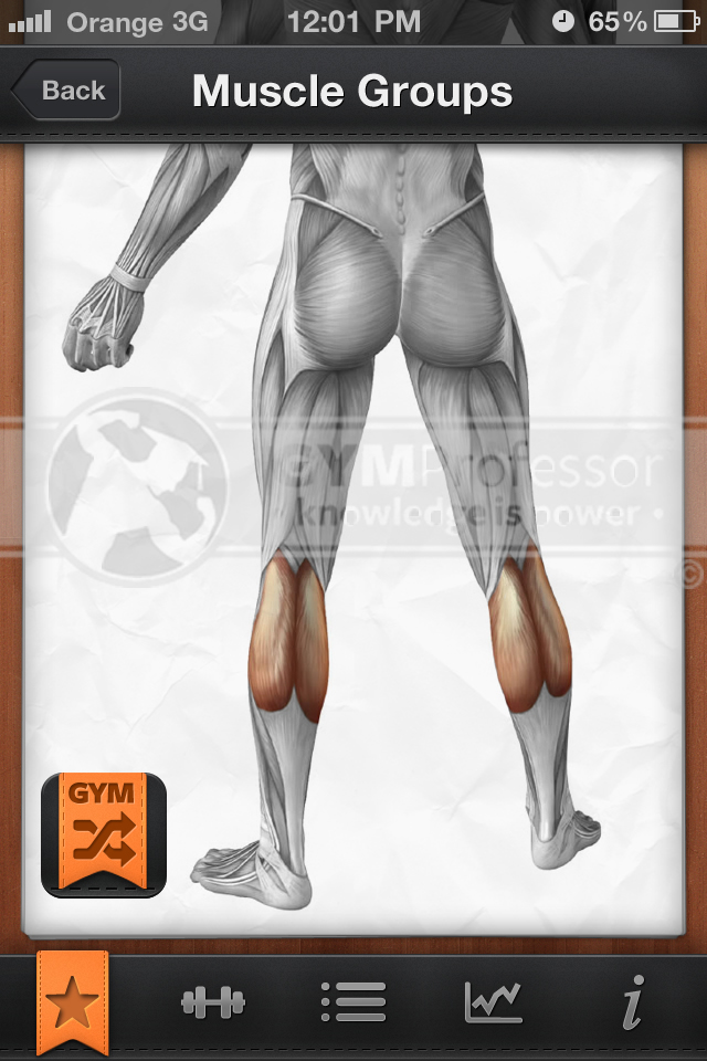 Gastrocnemius muscle group illustration from GP Shuffle