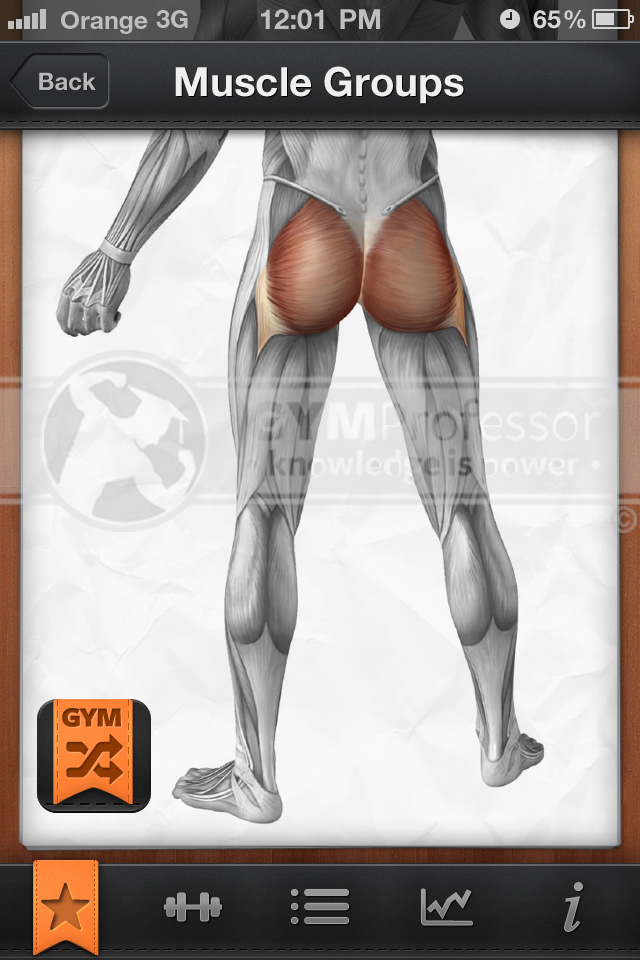 Glutes muscle group