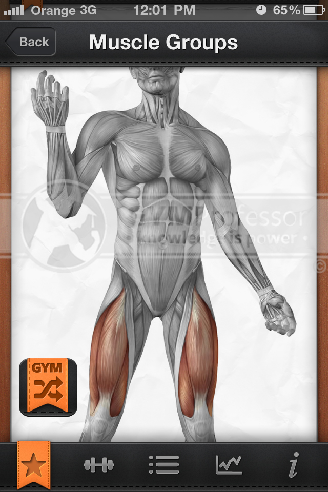 Quadriceps muscle group image from GP Shuffle