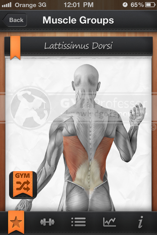 Anatomy image from GP Shuffle workout app